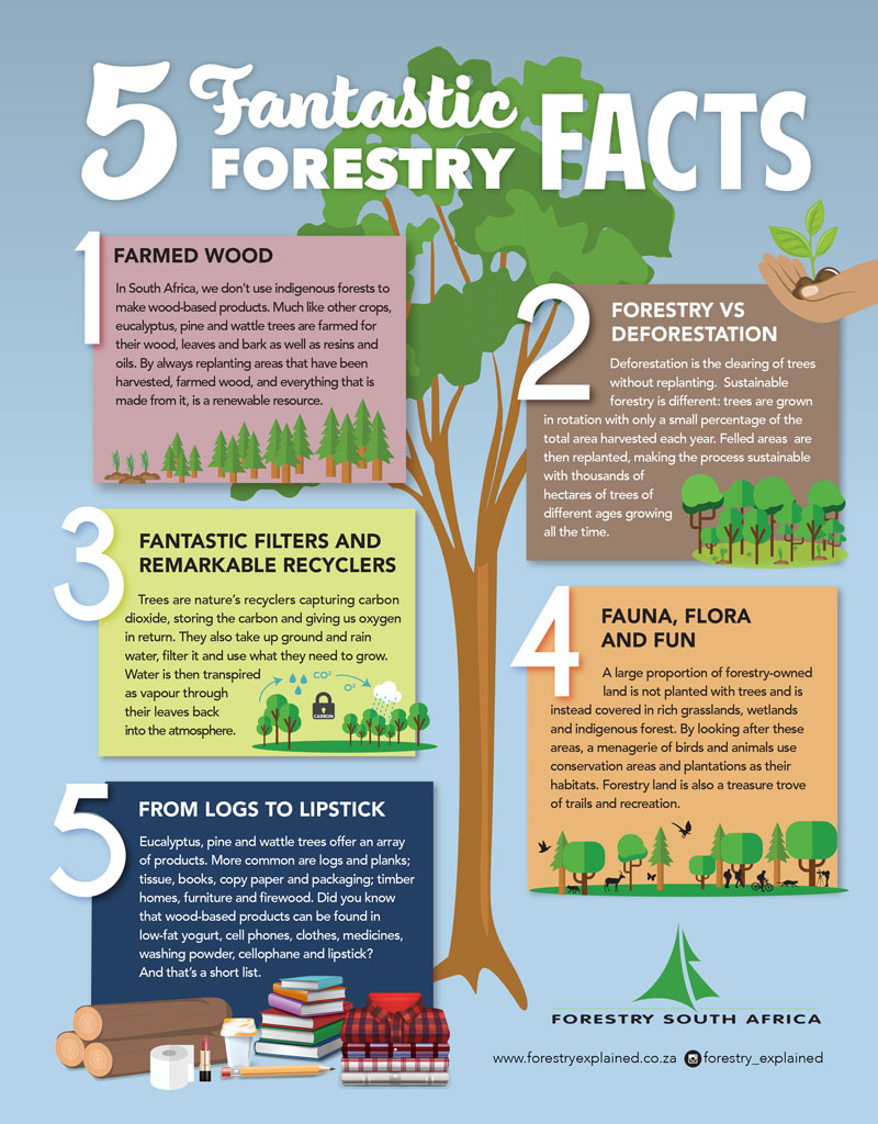 Five-Fantastic-Forestry-Facts